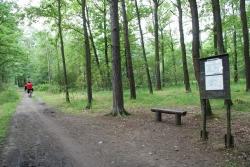 Klánovice les