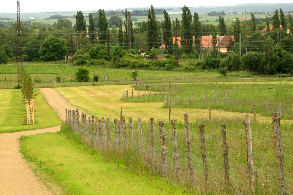 Lesopark Vinice - nové výsadby v oplocenkách (2009)